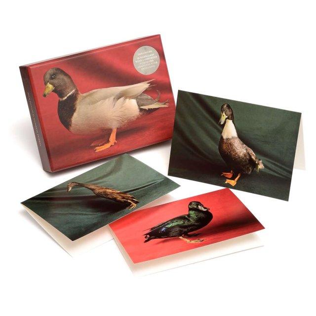 Beautiful Ducks notecards